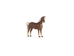 American Saddle Horse - Collect 'N Play